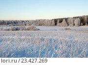 Купить «Зимний пейзаж с инеем», фото № 23427269, снято 29 декабря 2014 г. (c) Елена Коромыслова / Фотобанк Лори