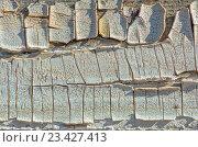 Купить «Старая крашеная доска с растрескавшейся краской», фото № 23427413, снято 22 сентября 2012 г. (c) Евгений Дробжев / Фотобанк Лори
