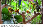 Купить «Попугаи крупным планом», видеоролик № 23427513, снято 24 октября 2014 г. (c) Elnur / Фотобанк Лори