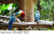 Купить «Попугаи крупным планом», видеоролик № 23427521, снято 25 октября 2014 г. (c) Elnur / Фотобанк Лори