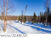 Купить «Солнечный день в зимнем лесу. Зимний пейзаж», фото № 23430721, снято 14 марта 2015 г. (c) Евгений Ткачёв / Фотобанк Лори