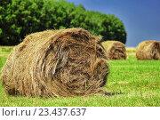 Стог сена в поле. Стоковое фото, фотограф Манапова Екатерина / Фотобанк Лори