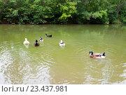 Купить «Лесной пруд с утками», фото № 23437981, снято 15 августа 2016 г. (c) Катерина Белякина / Фотобанк Лори