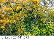 Купить «Осенний сезон», фото № 23441573, снято 22 октября 2015 г. (c) Татьяна Кахилл / Фотобанк Лори
