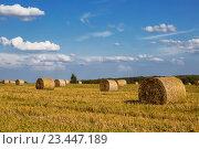 Купить «Рулоны сена на скошенном поле летним солнечным днем», фото № 23447189, снято 21 августа 2016 г. (c) Наталья Волкова / Фотобанк Лори