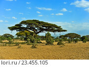 Купить «Африканские деревья в саванне», фото № 23455105, снято 1 января 2012 г. (c) Эдуард Кислинский / Фотобанк Лори
