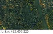 Купить «aerial view to green summer forest and power line», видеоролик № 23455225, снято 17 августа 2016 г. (c) Syda Productions / Фотобанк Лори
