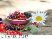 Красная и чёрная смородина. Стоковое фото, фотограф Ирина Садовская / Фотобанк Лори