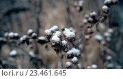 Купить «Колючки под снегом», видеоролик № 23461645, снято 3 сентября 2016 г. (c) Валерий Гусак / Фотобанк Лори