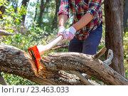 Купить «Мужчина рубит топором дерево в лесу», фото № 23463033, снято 14 мая 2015 г. (c) Иван Кузнецов / Фотобанк Лори