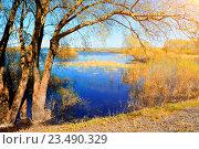 Купить «Осенний речной пейзаж с пожелтевшей ивой на берегу реки в солнечный день», фото № 23490329, снято 5 мая 2016 г. (c) Зезелина Марина / Фотобанк Лори