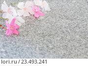 Купить «oleander on marble table», фото № 23493241, снято 29 августа 2016 г. (c) Майя Крученкова / Фотобанк Лори