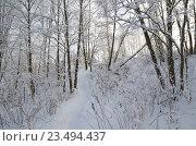 Купить «Зимний пейзаж», эксклюзивное фото № 23494437, снято 24 января 2016 г. (c) Елена Коромыслова / Фотобанк Лори