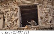 Обезьяна сидит в храме. Хампи. Стоковое видео, видеограф DPS / Фотобанк Лори