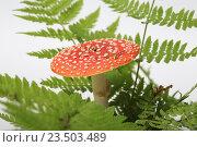 Купить «Ядовитый гриб мухомор с большой красной шляпкой среди листьев папоротника», эксклюзивное фото № 23503489, снято 8 сентября 2016 г. (c) Яна Королёва / Фотобанк Лори