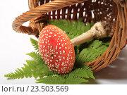 Купить «Ядовитый гриб мухомор и листья папоротника в корзине на белом фоне», эксклюзивное фото № 23503569, снято 8 сентября 2016 г. (c) Яна Королёва / Фотобанк Лори