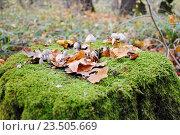 Купить «Грибы в лесу», фото № 23505669, снято 14 октября 2013 г. (c) Давидич Максим / Фотобанк Лори