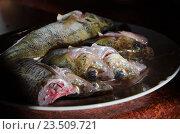 Свежая рыба. Стоковое фото, фотограф Дарья Серебрякова / Фотобанк Лори