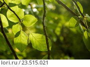 Купить «Деревья в летнем парке», фото № 23515021, снято 13 июля 2020 г. (c) Марина Володько / Фотобанк Лори