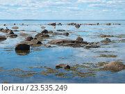 Купить «Берег Белого моря», фото № 23535249, снято 15 июня 2016 г. (c) Дмитрий Грушин / Фотобанк Лори