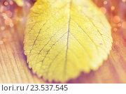 Купить «close up of yellow autumn leaf on wooden table», фото № 23537545, снято 19 октября 2015 г. (c) Syda Productions / Фотобанк Лори