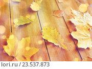 Купить «close up of many different fallen autumn leaves», фото № 23537873, снято 19 октября 2015 г. (c) Syda Productions / Фотобанк Лори