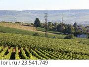 Купить «Франция. Виноградники Шампани», эксклюзивное фото № 23541749, снято 7 сентября 2016 г. (c) Татьяна Лата / Фотобанк Лори