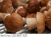 Купить «Помытые белые грибы», эксклюзивное фото № 23567121, снято 29 августа 2016 г. (c) Игорь Низов / Фотобанк Лори