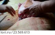 Купить «Two women cut a large piece of pork», видеоролик № 23569613, снято 14 августа 2016 г. (c) Володина Ольга / Фотобанк Лори