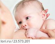 Купить «Baby feeds on mother's breasts milk», фото № 23573201, снято 3 июня 2014 г. (c) Оксана Кузьмина / Фотобанк Лори
