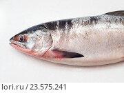 Salmon fishs on white background. Стоковое фото, фотограф Алексей Суворов / Фотобанк Лори