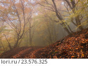 Купить «Дорога в туманном осеннем лесу с опавшими листьями», фото № 23576325, снято 22 октября 2015 г. (c) Оксана Гильман / Фотобанк Лори