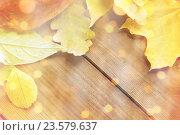 Купить «close up of many different fallen autumn leaves», фото № 23579637, снято 19 октября 2015 г. (c) Syda Productions / Фотобанк Лори