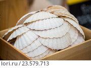 Купить «close up of seashells in wooden box», фото № 23579713, снято 11 июня 2016 г. (c) Syda Productions / Фотобанк Лори