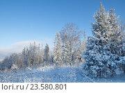Купить «Зимний лес», эксклюзивное фото № 23580801, снято 24 января 2016 г. (c) Елена Коромыслова / Фотобанк Лори