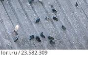 Голуби в парке на наклонной плоскости. Стоковое видео, видеограф Потийко Сергей / Фотобанк Лори