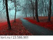 Купить «Autumn landscape of foggy autumn park with red fallen autumn leaves», фото № 23586901, снято 6 ноября 2015 г. (c) Зезелина Марина / Фотобанк Лори
