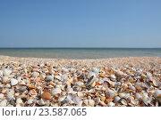 Ракушечный пляж. Азовское море. Стоковое фото, фотограф Татьяна Цеброва / Фотобанк Лори