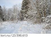 Купить «Зимний пейзаж», эксклюзивное фото № 23590613, снято 24 января 2016 г. (c) Елена Коромыслова / Фотобанк Лори
