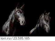 Купить «horses», фото № 23595185, снято 27 июля 2016 г. (c) age Fotostock / Фотобанк Лори