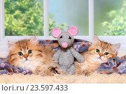 Купить «2 kitten», фото № 23597433, снято 22 июля 2016 г. (c) age Fotostock / Фотобанк Лори