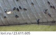 Голуби в парке возле воды. Стоковое видео, видеограф Потийко Сергей / Фотобанк Лори