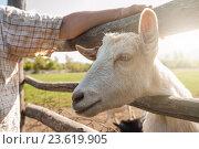 Купить «white goat closeup», фото № 23619905, снято 19 сентября 2016 г. (c) Jan Jack Russo Media / Фотобанк Лори