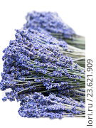 Купить «Fresh lavender handmade bunches on white», фото № 23621909, снято 6 сентября 2016 г. (c) Татьяна Белова / Фотобанк Лори