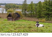 Сельский пейзаж с лежащей на лугу коровой и деревянным домиком на берегу водоёма. Стоковое фото, фотограф Светогор Александр Романович / Фотобанк Лори