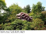 Купить «Edinburgh, Royal Botanic Garden, detail», фото № 23631421, снято 26 июня 2019 г. (c) age Fotostock / Фотобанк Лори
