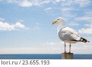 Купить «seagull over sea and blue sky», фото № 23655193, снято 25 июня 2016 г. (c) Syda Productions / Фотобанк Лори