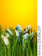 Купить «Стодолларовые купюры в зеленой траве. Финансовая концепция», фото № 23656277, снято 2 марта 2016 г. (c) Pavel Biryukov / Фотобанк Лори
