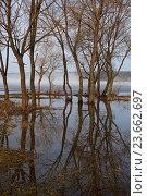 Весна, отражение деревьев. Стоковое фото, фотограф Сергей Панкин / Фотобанк Лори