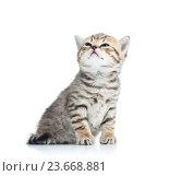 Купить «charming cat kitten looking up», фото № 23668881, снято 17 декабря 2013 г. (c) Оксана Кузьмина / Фотобанк Лори